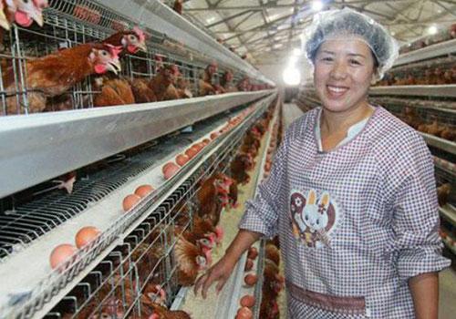 Клетки для куриц несушек купить из Китая по низким ценам
