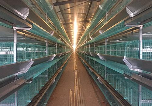 клеточные батареи для кур несушек птицефабрики