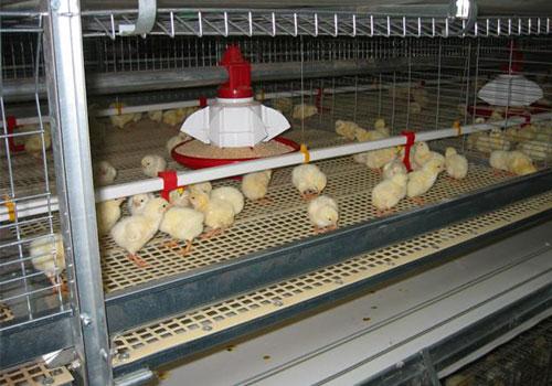 клетки для бройлерных кур с линией кормления