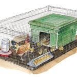 Брудер для цыплят купить