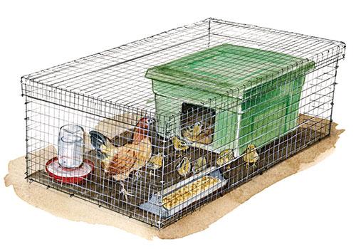 Брудер для цыплят картинка