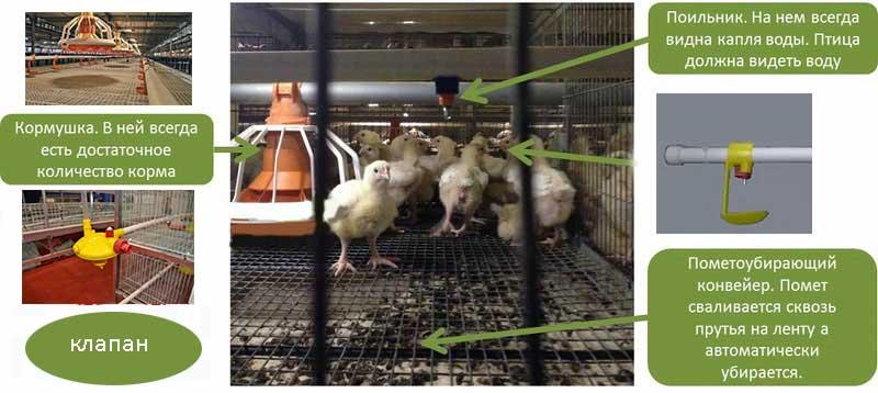 Конструкция клетки для цыплят