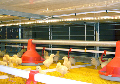 плотность посадки цыплят бройлеров