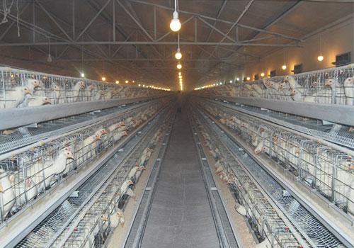 клетки для куриц несушек типа А