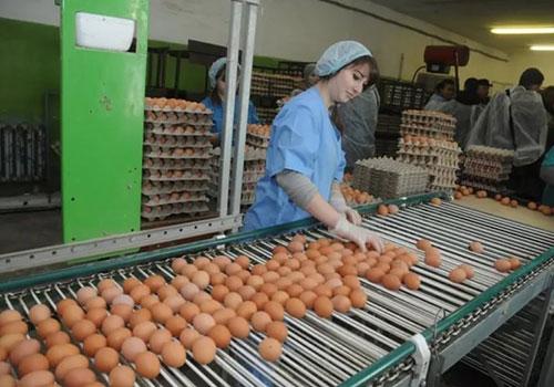 автоматическая система яйцесбора