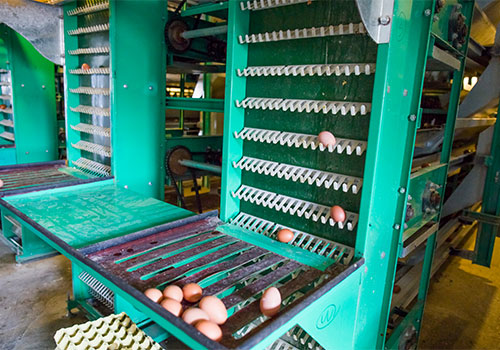 механизация птицефабрики